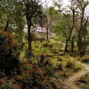 Märchenwald mit Orchideen und Erdbeeren (Latamarang 2400Hm)