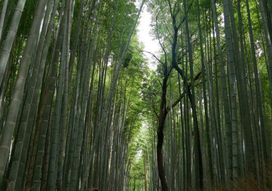 Weiter in Japan